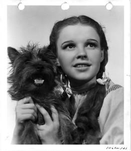 Dorothy e Totò - Il Mago di Oz