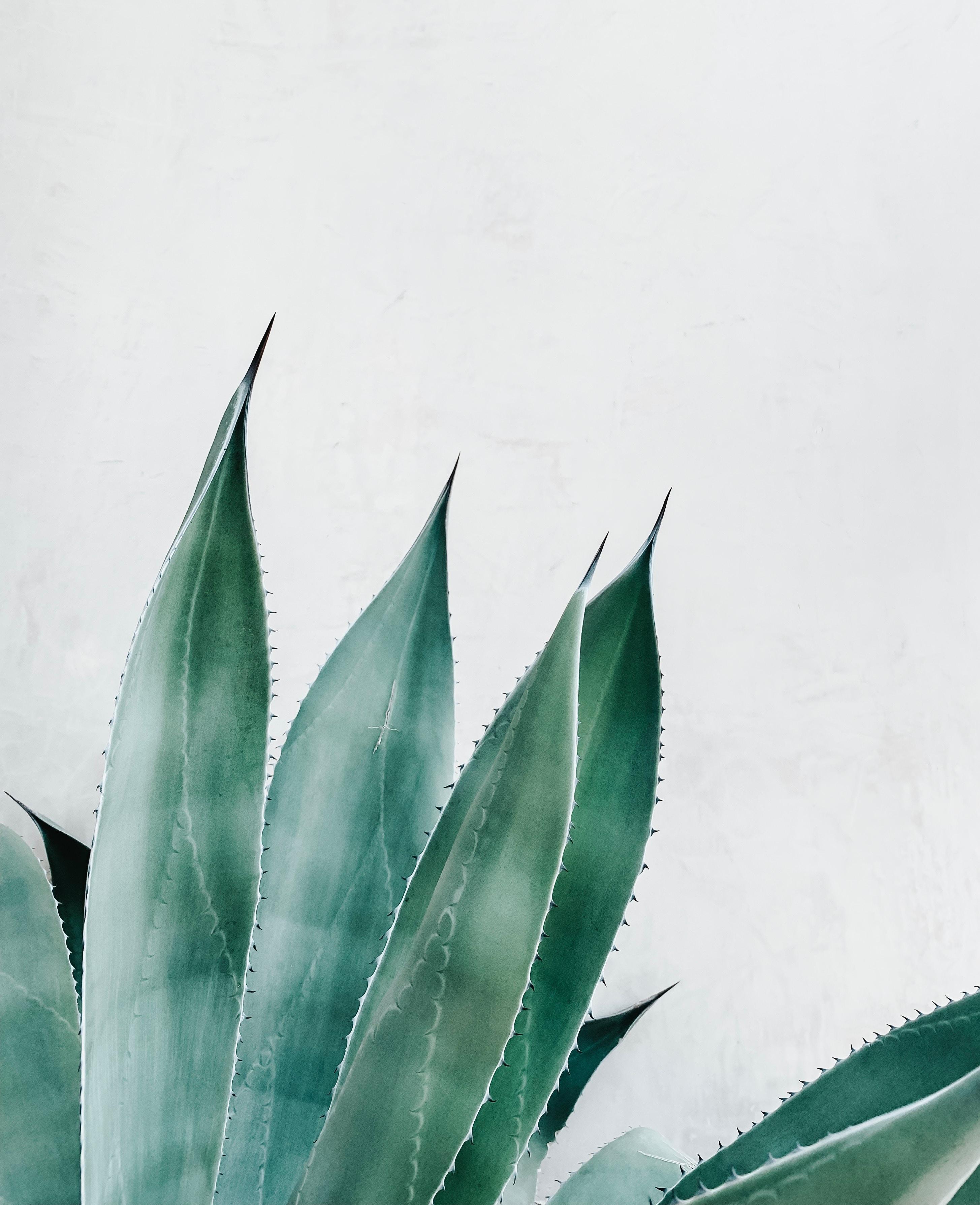 Aloe In Giardino aloe vera i benefici e gli utilizzi di un antico nettare di vita